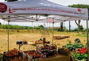 albicocche del vesuvio, presidio slow food, raccolto 2021